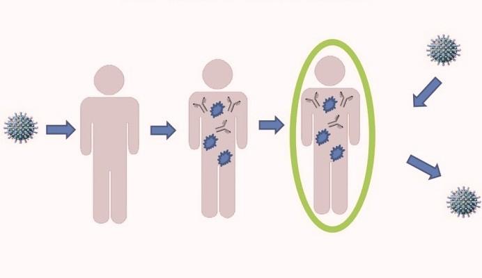 антитела к коронавируса
