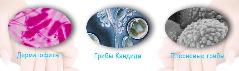 виды грибка