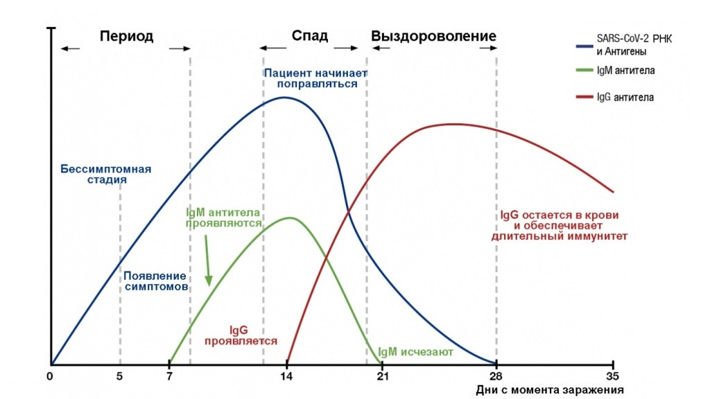 Титр антител к коронавирусу